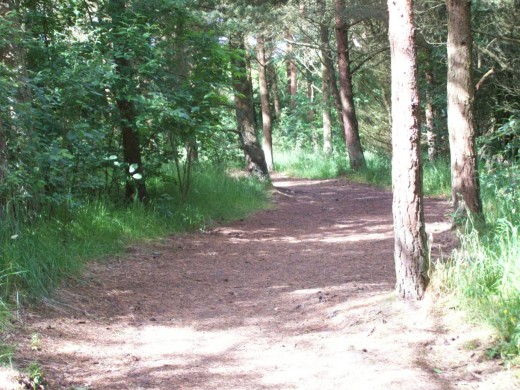 One of the many woodland nature trails that are enjoyed by people and pets alike.