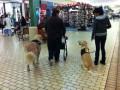 How Do Seizure Assistance Dogs Sense Seizures?