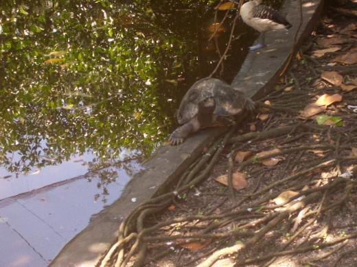 Turtle At The Flamingo Garden