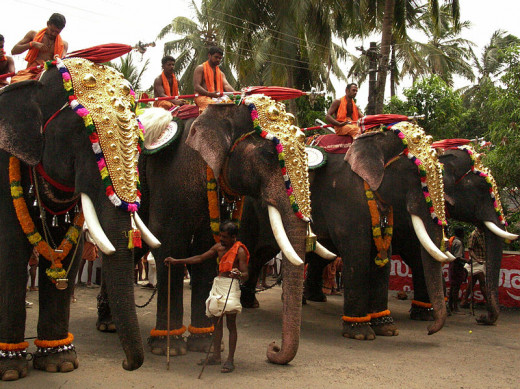 Elephants in accouterments