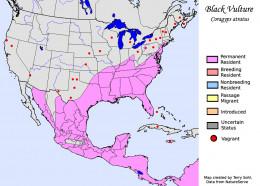 Black Vulture Range Map