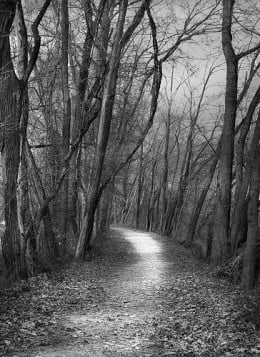 The Path from Moonbouncer flickr.com