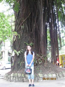 The big old tree