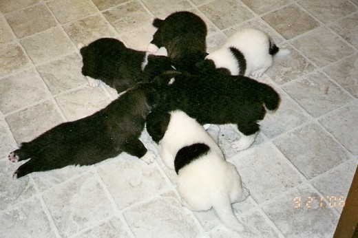 Our litter