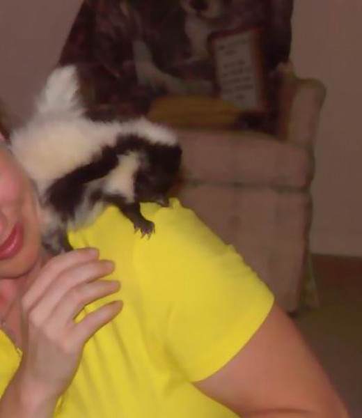 My little Tinker...  a baby skunk I worked with at the Science Center where I was employed.