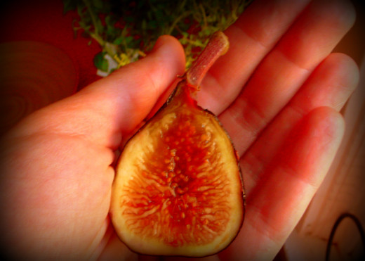 Those naughty Italians with their ideas about figs.