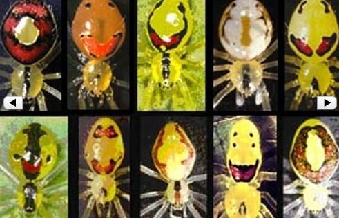 The Hawaiian Happy Face Spider