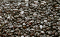 Chia Seeds - A Super Seed of All Seeds