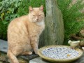 Recognising and dealing with feline urinary tract problems.