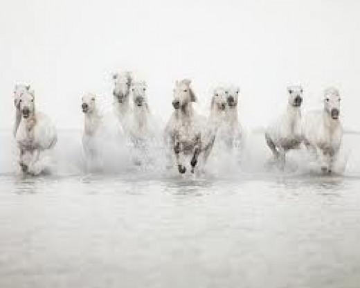 like whitehorses...