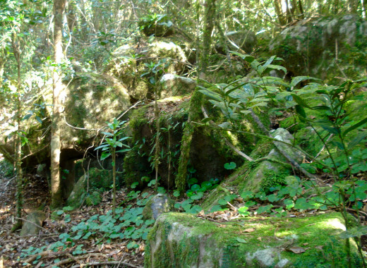 A Mossy Nook Along the Track to the Lookout