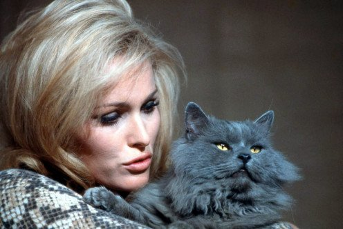 Ursula Andress and cat