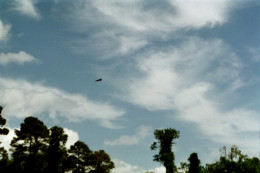flying higher than eagles