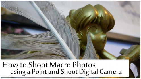 Tips on using your point and shoot camera for macro photography.