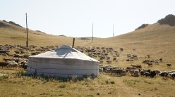 A herd of sheep and goats drift through a camp at White Lake