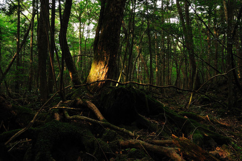 Aokigahara Forest: 2008 (The Sea of Trees)