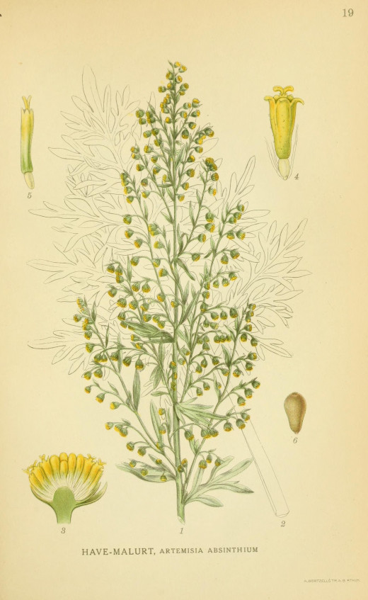 Billeder of Norden's Flora by A.Mentz and C.H. Ostenfield