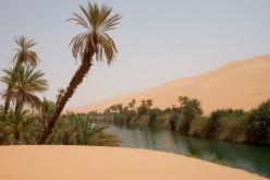 Amazing Arabian Desert Life
