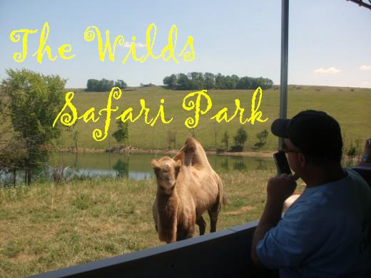 Sit in the comfort of a shaded safari bus and see beautiful, exotic and endangered animals at The Wilds in Cumberland, Ohio.