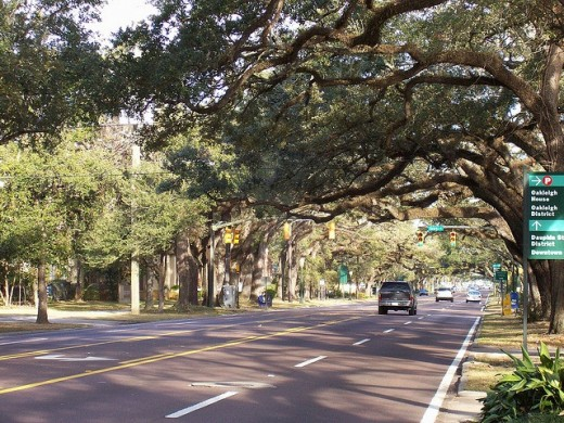 Live Oak-Lined Government Street of the Oakleigh Garden District.