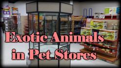 Popular Inexpensive Exotic Animals in Chain Pet Stores