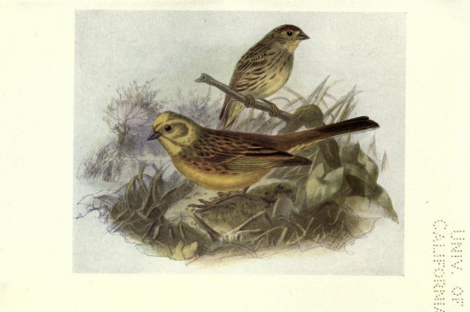 Birds of Britain {