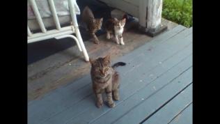 Dixie Ruby Hope Dreym with her remaining babies, Tiger Beau Diddley Dreym and Callie Ellen Coe Dreym.