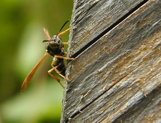 bee on board