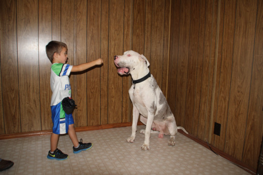 Adkins showing how a well trained dog can be controlled by a five year old child.