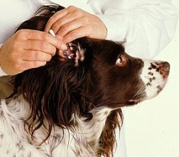 Cleaning the ear
