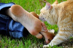 How to Get Rid of Smelly Feet Quickly