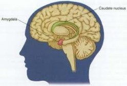 That little peanut located in the Limbic System, or the Mammalian Brain is the Amygdala.