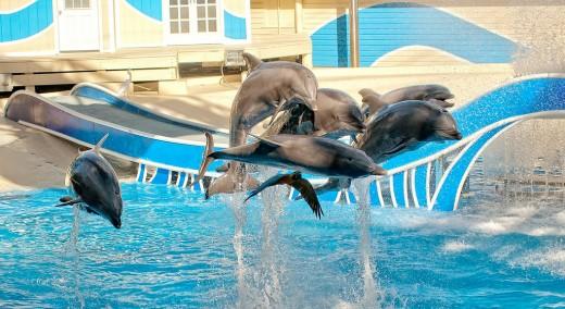 Sea World, Dophin Show