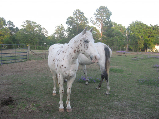 Horse farms are fascinating!