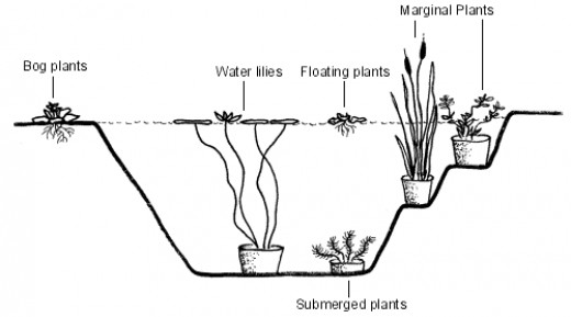 Types of aquatic plants