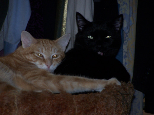 Blaze and Darcy on Cat Tree