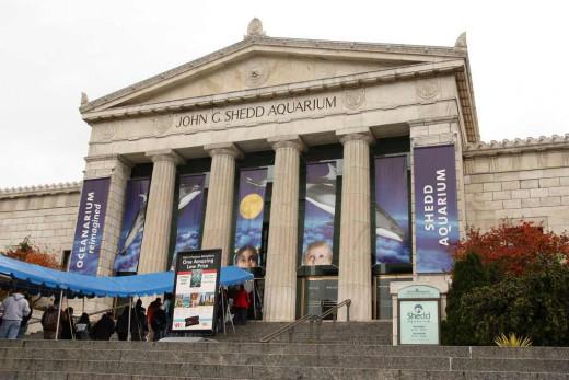 Visit Shedd Aquarium