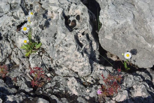 Flowers have taken spots on thin soil over exposed rock.