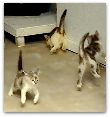 Bouncing kitties celebrate their names!