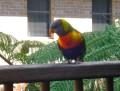 Springbrook Township, Queensland