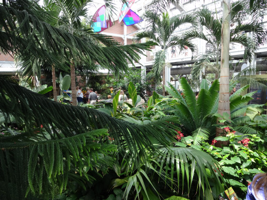 This is a view of the foliage inside the butterfly exhibit.