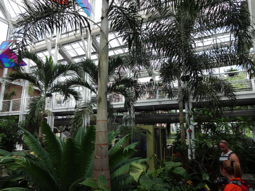 This is a shot across the exhibit. It feels like you are in an indoor tropical jungle.
