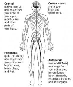 Pheripheral Neuropathy Diagnosis and Treatment