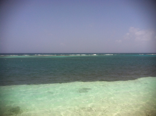 Beautiful snorkeling and diving are just seconds from the beach!
