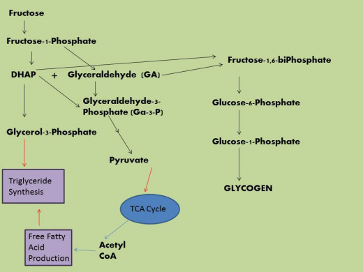 TCA= Tricarboxylic Acid Cycle also known as Krebs Cycle or the Citric Acid Cycle.