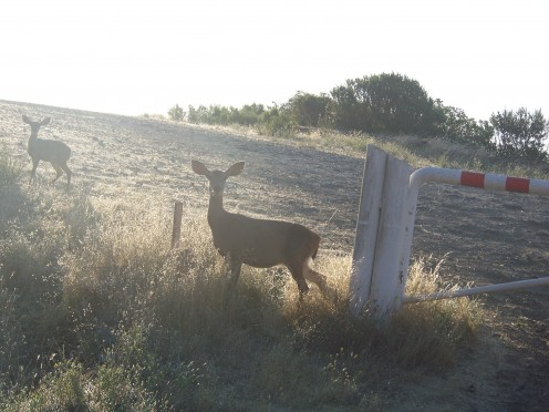 Morning visitors to the campground.