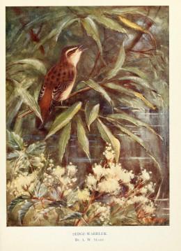 Birds through the year {1922} courtesy of the BHL