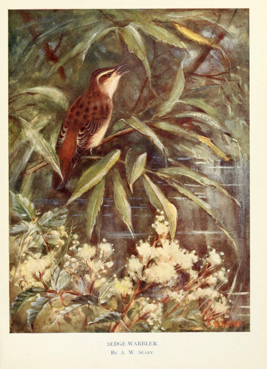 Birds through the year {1922} courtesy of the BHL