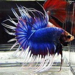 The Physical Signs of a Healthy Betta Fish