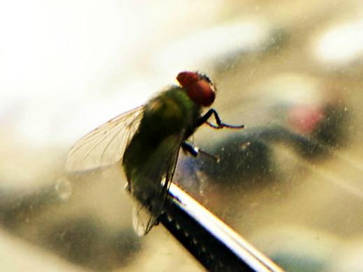 A ninja mom caught a fly!